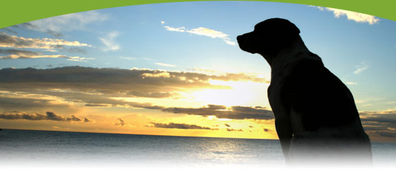 Nova Scotia Pet Friendly Accommodations Osprey Shores Eastern